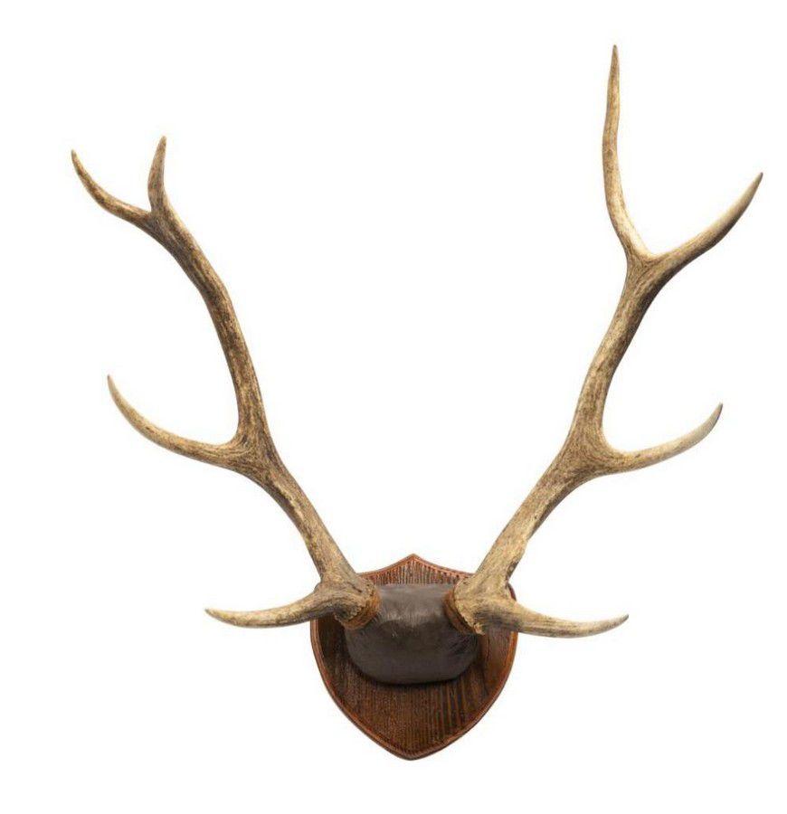 Image result for mounted antler